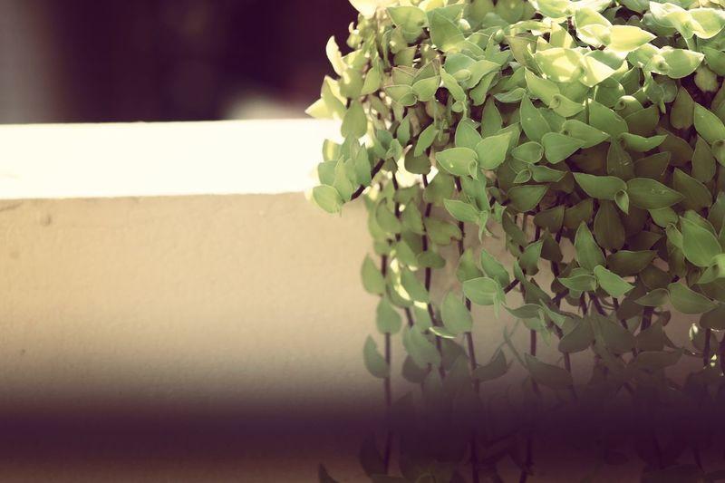 Flower Leaf Plant Part Beauty Close-up Plant Green Color