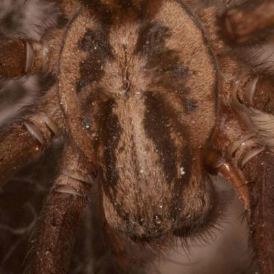 Guarding my bathroom. #spider #arachnid #scary Spider Scary Arachnid Improvedimage