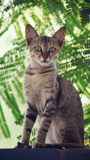 Portrait of cat sitting on plant