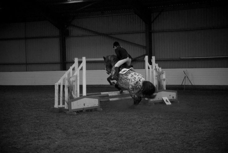 Showjumping Horses Horse Riding Black And White