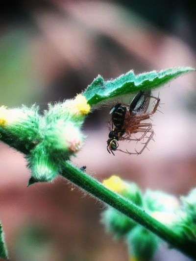 Insect Spider Spider Web Close-up Animal Themes Ant Colony Chachoengsao Penguin Beehive Arachnid Web Animal Antenna Butterfly - Insect Leaf Vein Mosquito Blooming Pest Flamingo Antarctica APIculture Arthropod
