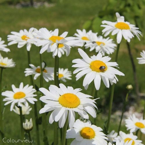 Flowerstalking Flowerstarz Florecitas_mx Flowersturk floralstyales_gf flowerstagram flowers_obsessions flower_blues floral_secrets floralfix
