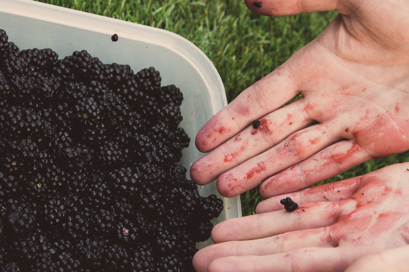 Red Hand Adult Blackberry Close-up Day Dirty Food Food And Drink Freshness Fruit Healthy Eating High Angle View Holding Human Body Part Human Finger Human Hand Indoors  Lifestyles Men One Person People Real People Summer Time  Women The Week On EyeEm