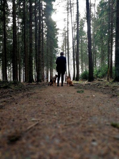 Westwood DogLove BaumLiebe OurWayOfLife Beautiful Nature Beautiful Animals  Feel The Journey