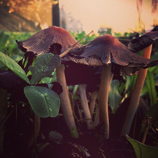 Mushroom Mushy Mik_osz Mik Ikozosseg Fotoklub Gomba Hungary Nagykanizsa Magyarország Like4like Instatagsapp Dailyfeature Daily_shots Naturelovers Nature_seekers Nature_shooters Nature