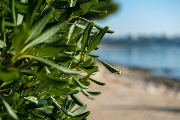 Take a walk on the seaside Green Color Plant Growth Focus On Foreground Leaf Plant Part Close-up Nature Day Beauty In Nature No People Selective Focus Water Tranquility Outdoors Sunlight Freshness Land Sea Seaside_collection Leisure Activity Tourism Tourism Destination Clear Sky