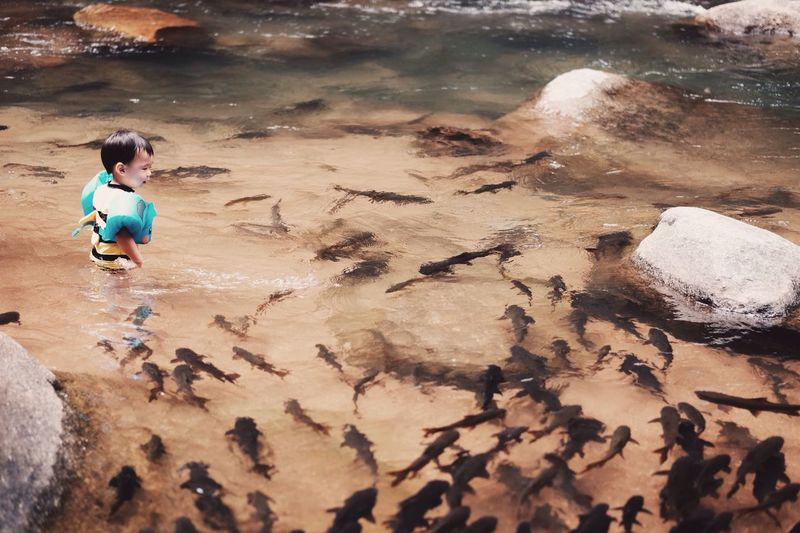 High Angle View Of Boy Standing By Fish In River