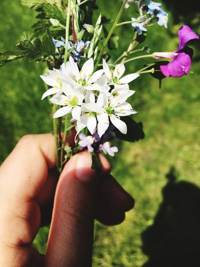 Wild Flowers Arrangement Beauty In Nature Garden Sun Summer