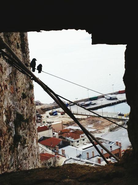Kavala @ Kavala In Greece  Castle Port Seaside Birds Bird Photography Bird