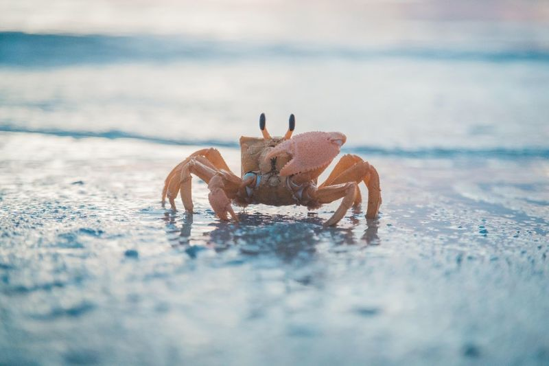 Close-up of a crab on the beach