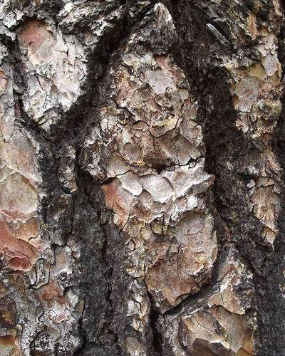 Wmm_brown Bark Treebark Trees Rsa_trees Tt_rt_nature Pocket_trees