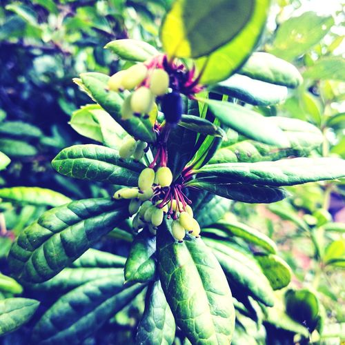 Randomness Green Color Nature Leaf Plant No People Growth Close-up Day Outdoors Beauty In Nature Tree Fragility Freshness Seeds Fruit No Idea What This Is.  Garden Photography Red Bright Green Leaves