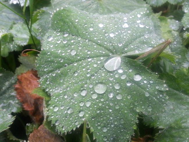 Morning dew My Garden Fotofantast Morning Dew Taking Photos