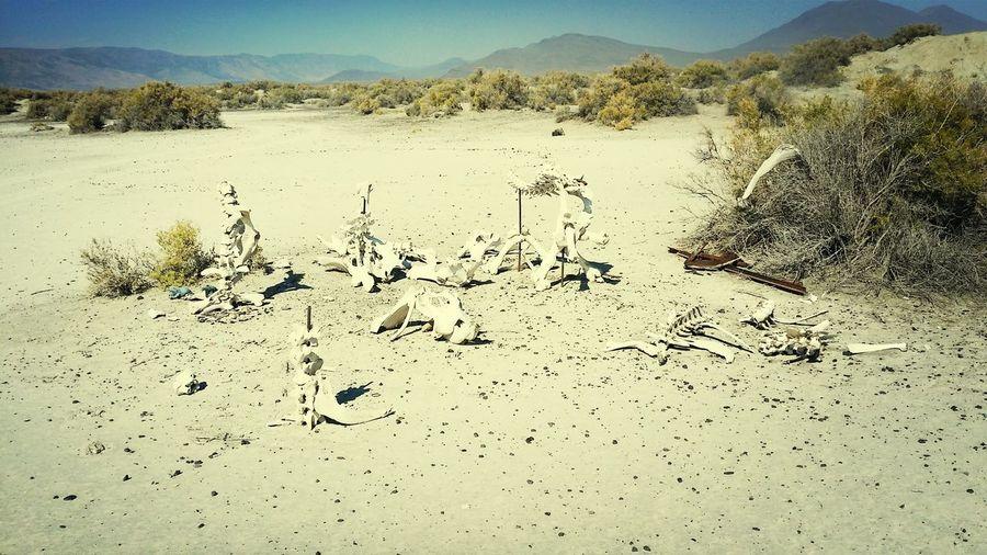 Alvord Desert Playa Ceremonial Grounds Bones