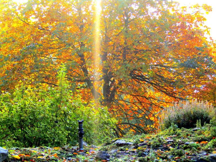 2016 Wundervoller Herbsttag