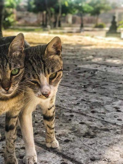 Love between cats Romance Cats Day Love ♥ Mammal No People Realationship Vertebrate