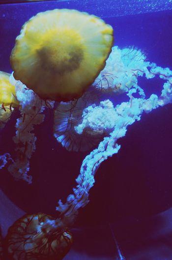 Jellyfish Schönbrunn Zoo