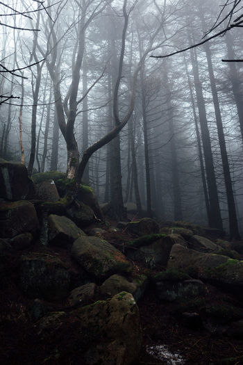 Mystic Atmospheric Mood Beauty In Nature Day Fog Forest Harz Hazy  Land Nature No People Non-urban Scene Outdoors Plant Rock Rock - Object Scenics - Nature Solid Tranquil Scene Tranquility Tree Tree Trunk Trunk WoodLand