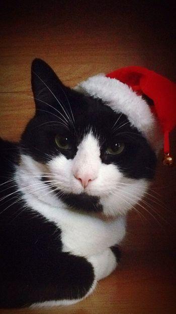 CatInTheHat SantaClaws Christmaskitty Joyeux Noël