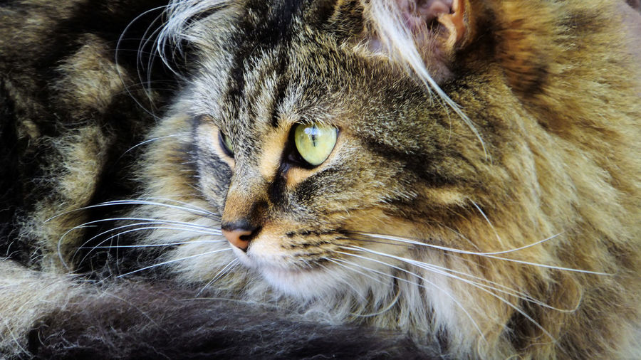 And here's KitKat Cat Kitkat Pussycat Pets