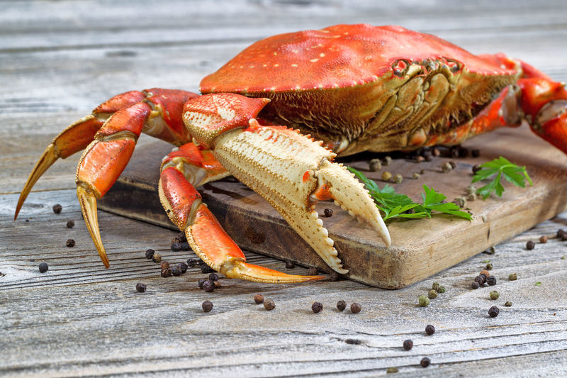 Cooked Crab Animal Themes Animal Wildlife Animals In The Wild Beach Claw Close-up Crab Day Dungeness No People One Animal Outdoors Sea Sea Life Seafood