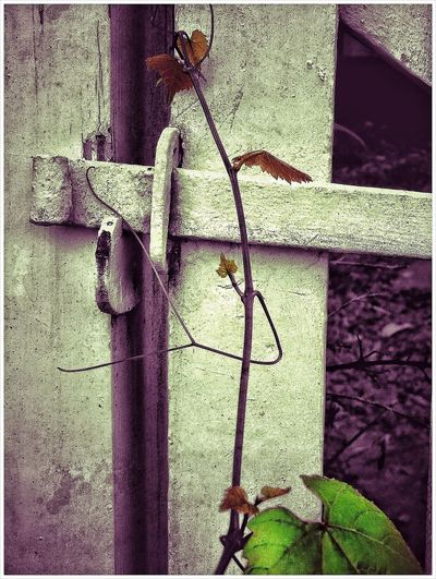 Canon Powershot N Snapseed Editing  Old Gate Ivy