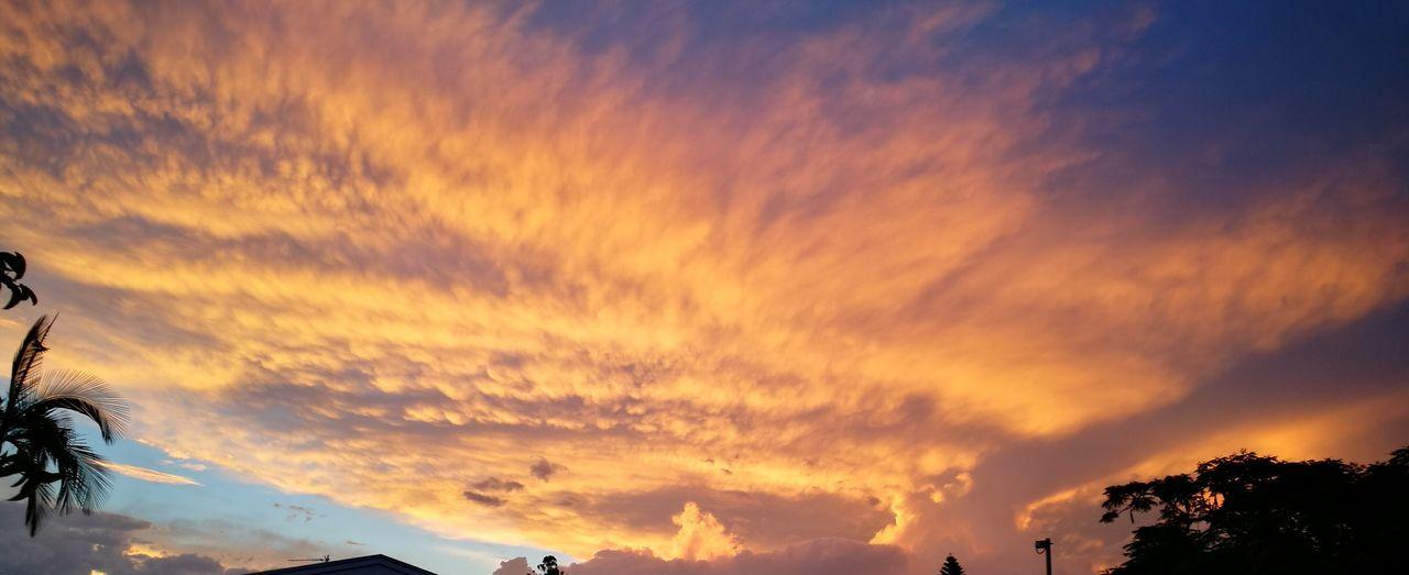 Sunset Sky Tree Nature