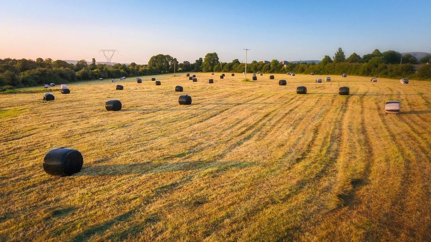 Bale  Agriculture Harvesting Hay Bale Field Hay Rural Scene Farm Crop  Rolled Up No People Nature Tranquil Scene Tranquility Scenics Landscape Beauty In Nature Clear Sky Sky Day Dji Ireland Drone  Clear Sky