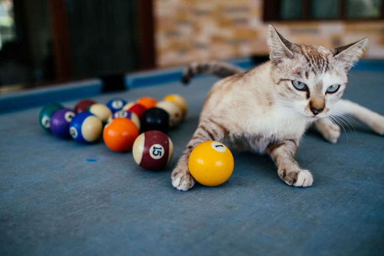 Cat relaxing on pool table