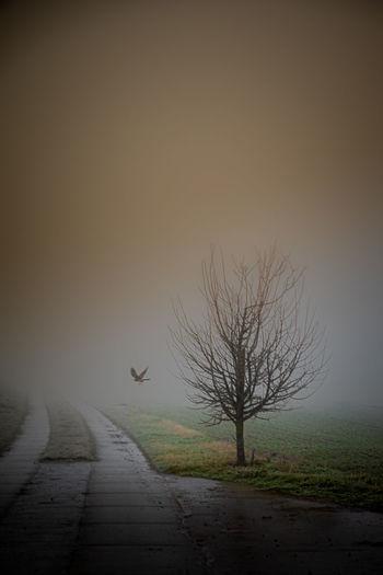 Bare tree on field against sky