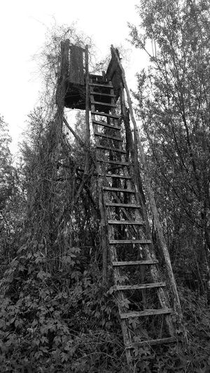 Low Angle View Tree Outdoors No People Sky Nature Structure Nature Takeing Over Manmade Structure Nature Takes Over Nature Takes It Back Photography Blackandwhite Vegetation Hunting Tower Hunting Lodge Hunting Tower Grass