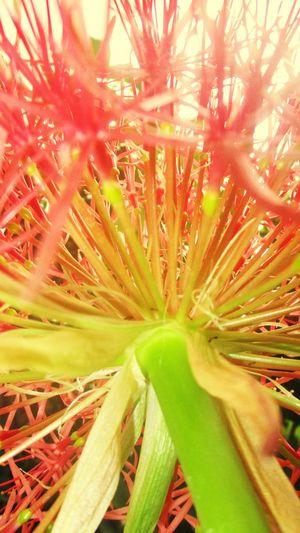 Beauty in flowers Beautiful Macro Outdoors Closeup Flower Garden My Favorite Photo @sekharchinta , Hyderabad India