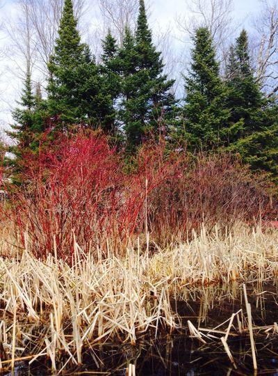 Lakeside Nature Trees IPSNoFilter Landscape