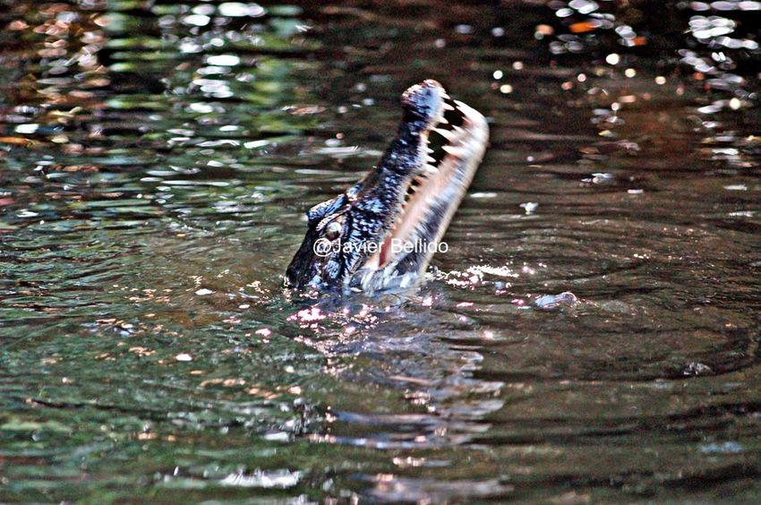 La fauna de Costa Rica Travelling Travel Photography Viaje A Costa Rica Fotografia De Viaje