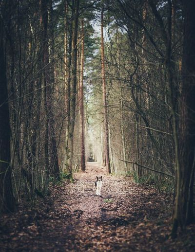 Dog on footpath amidst trees in a forest