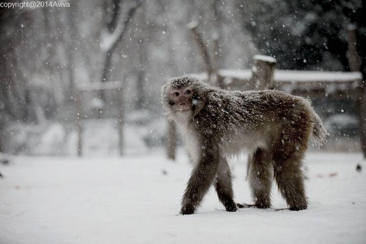 Monkey????