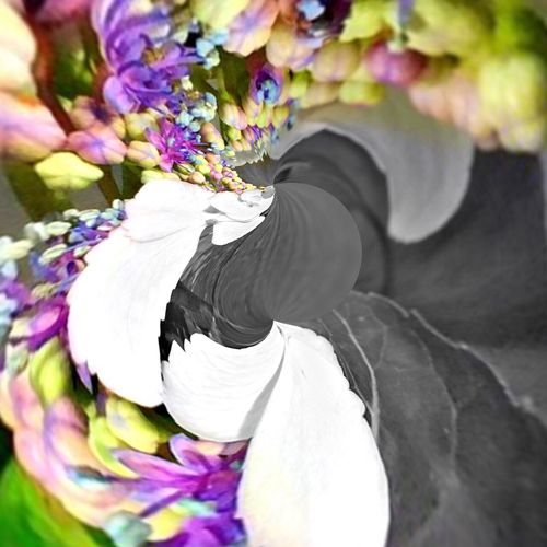 Home is Where the Art Is. Flower Fragility Beauty In Nature Close-up Flower Head Nature Freshness Fine Art Photography