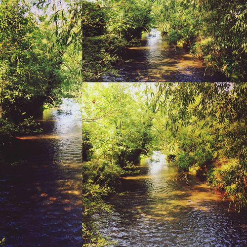 Nature Photography Tranquility Lastofsummer Canals And Waterways United Kingdom Newbury Uk No People Outdoors Beauty In Nature Nature_collection Waterreflections