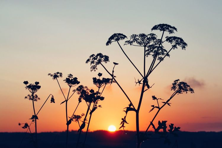 Rising Sunset Sun Silhouette Plant Growth Beauty In Nature Stem Tranquil Scene Tranquility Flower Nature Scenics Fragility Orange Color Close-up Idyllic Vibrant Color Focus On Foreground Romantic Sky