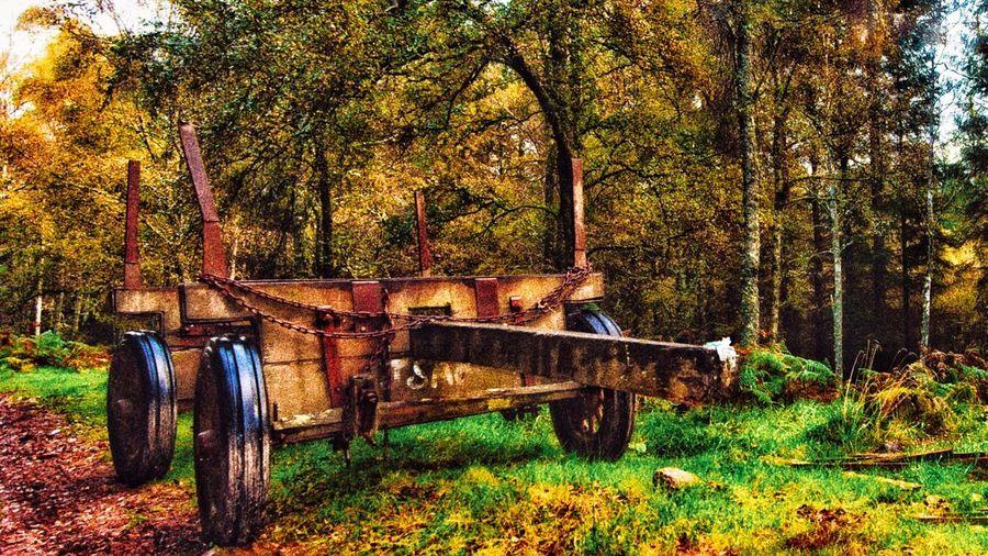 Old Farming trailer lost in the woods. EyeEmNewHere Farming Machinery Farm Scotland Finzean EyeEmNewHere Banchory EyeEmNewHere