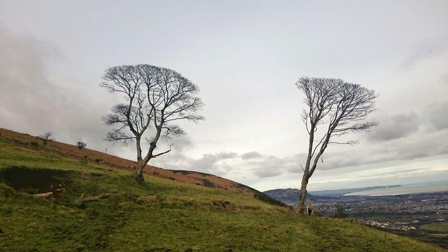 Bare trees on grassy field against sky