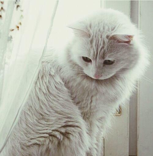 Cat Catsofinstagram Beutiful  Black Fofis