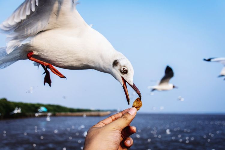 Feeding  Feeding The Birds Feeding Birds Feed  Human Hand Bird Beak Eating Water Close-up Sky Sea Bird Seagull Water Bird Flock Of Birds Spread Wings Avian