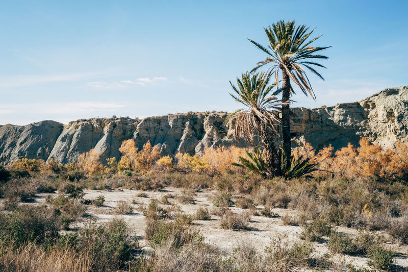The Tabernas Desert in Spain is the only desert in Europe and filming location for numerous western movies. Desert Europe Trip Film MOVIE Palm Tree SPAIN Dry Europe Filming Location Mountain Movie Location Roadtrip Sun Tabernas Tabernas Desert