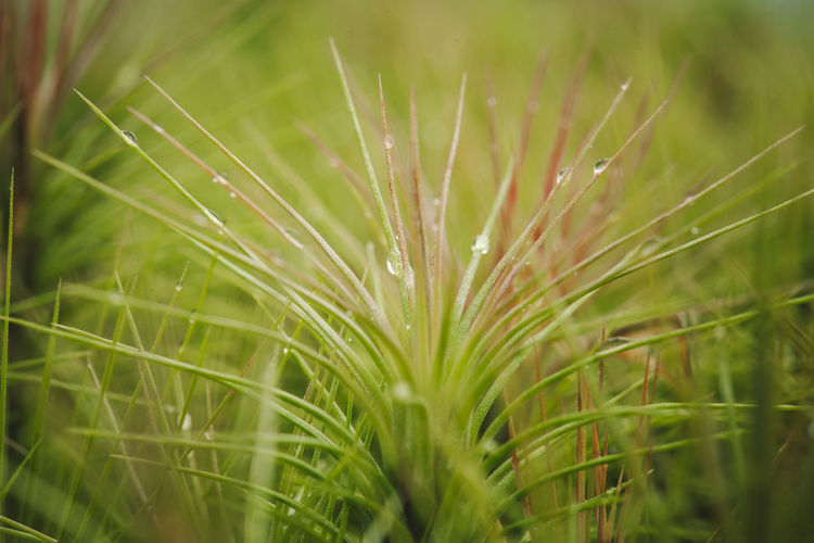 Close-up of wet plant on field