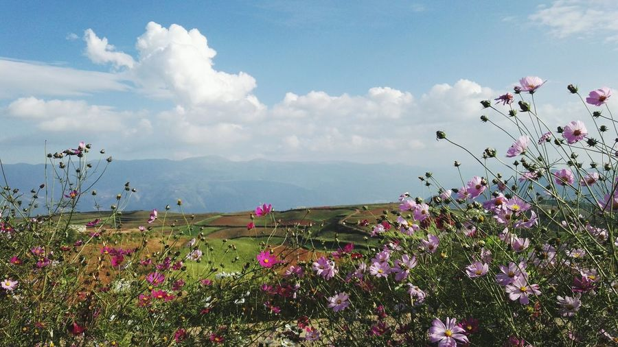 Flower Fragility Freshness Growth Beauty In Nature Sky Plant Blossom In Bloom Cloud - Sky Pink Color Scenics Mountain Springtime Nature Tranquil Scene Wildflower Petal Tranquility Botany