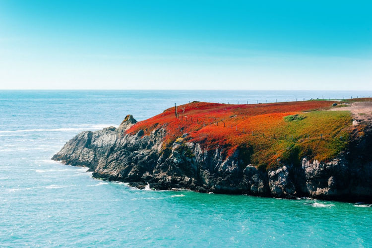 Fire red vegetation on a rock at the pacific ocean, california