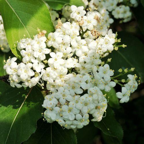 Panasonic Lumix DMC-FZ80 Flowering Plant Flower Vulnerability  Fragility Beauty In Nature Plant Freshness