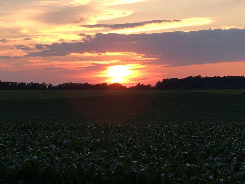 Sunset cornfield Sunset Cornfield