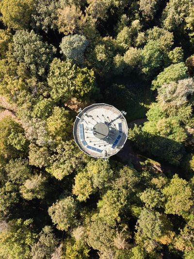 High angle view of clock amidst trees